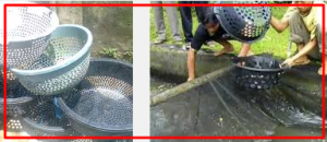 Cara Membuat Alat Bak Sortir Ikan Lele