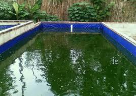 Membasmi Hama Dan Penyakit Ikan Lele