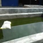 Cara Membuat kolam Lele Dari Beton-Batu