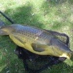 Resep Umpan Mancing Ikan Mas 2018 Terbaik