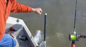 Teknik Umpan Mancing Ikan Patin Sungai Danau