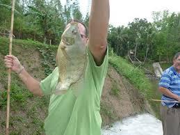 Umpan Mancing Mujair Danau-Tambak-Rawa