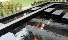 Kolam Ikan Koi Terbaik Hias Dan Budidaya