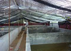 13 Bentuk Desain Kolam Ikan Lele Budidaya
