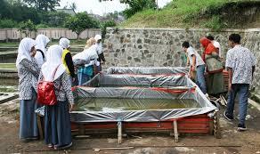 Kelebihan Pembesaran Lele Sangkuriang Kolam Terpal vs Semen