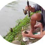Umpan Mancing Gurame Kolam 2018 Paling Jitu