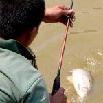 Cara Membuat Umpan Ikan Mas 2018 (Sesuai Pengalaman)