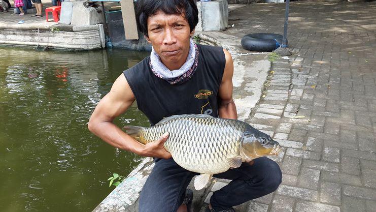 Umpan Mancing Ikan Mas Cuaca Panas Paling Galak