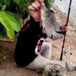 Umpan Mancing Ikan Mujair 2018 ,Gunakan Umpan Galak Ini