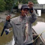 Umpan Mancing Ikan Sembilang Muara 2018 Paling Jos