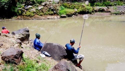 Umpan Mancing Ikan Besar di Sungai Paling Ampuh