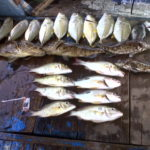 Umpan Mancing Ikan Kerapu di Laut 2018 (Pengalaman Pribadi)