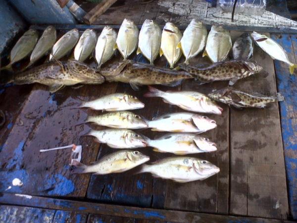 Umpan Mancing Ikan Kerapu di Laut (Pengalaman Pribadi)