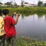 Cara Casting Gabus di Sungai Panduan Pemula (Buktikan)