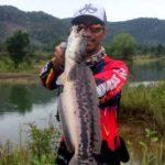 Trik Belajar Casting Gabus Fish Wild (Pengalaman Sesepuh Tua)