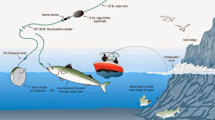 Cara Mancing Dasaran di Laut Segala Cuaca (Pengalaman Sendiri)