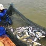 Hama dan Penyakit Pada Ternak Ikan Patin