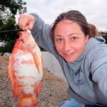 Membuat Umpan Mancing Ikan Nila Merah Galak