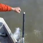 Teknik Umpan Mancing Ikan Patin 2018 Sungai Danau