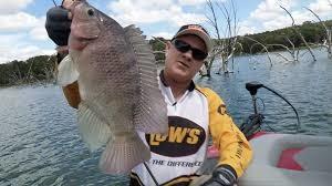 Umpan Mancing Ikan Mujair Paling Galak