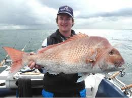 Teknik Umpan Mancing Ikan Kakap Putih Besar
