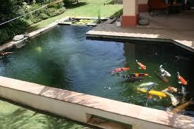 Model Kolam Ikan Belakang Rumah