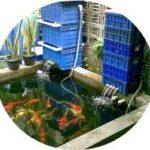 Jenis Filter Kolam Ikan Koi Sederhana Sampai Otomatis Terbaik