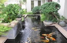 Kualitas Air Pada Kolam Ikan Koi Supaya Ikan Sehat