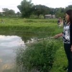 Umpan Mancing Sidat di Sungai  Terbukti Paten