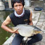 Umpan Mancing Ikan Mas Cuaca Panas 2018 Paling Galak