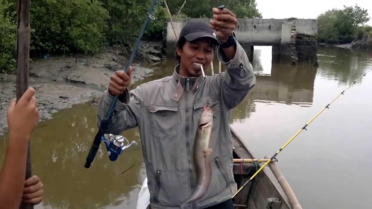 Umpan Mancing Ikan Sembilang Muara Paling Jos