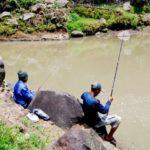 Umpan Mancing Ikan Besar di Sungai 2018 Paling Ampuh