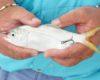Cara Pasang Kail Umpan Mancing di Laut (Pengalaman Pribadi)