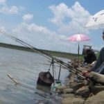 Cara Membuat Umpan Mancing di Sungai 2018 Sederhana Terbukti Galak