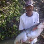 Umpan Mancing Ikan Baung di Sungai 2018 (Resep Terbaik)
