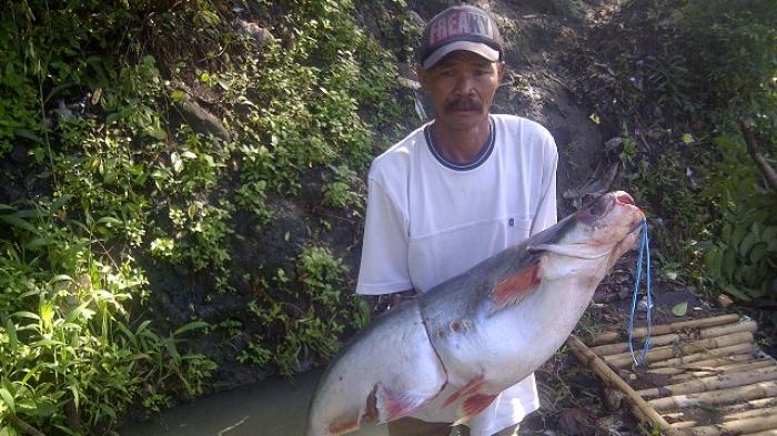 Umpan Mancing Ikan Baung di Sungai (Resep Terbaik)