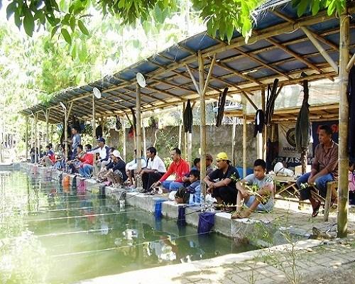 5 Jenis Plus Resep Umpan Ikan Patin Kolam Berbayar Sudah Terbukti