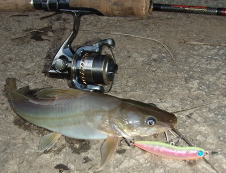 Cara Membuat Kucur Umpan Ikan Baung Lengkap Dengan Campurannya