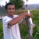 Membuat Resep Alami Umpan Ikan Patin Liar Di Danau 2018