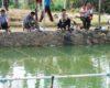 Racikan Ampuh Umpan Ikan Mas Air Keruh Malam Hari