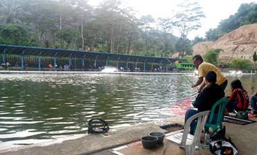 Beberapa Aroma Kesukaan Ikan Mas Selain Menggunakan Esen