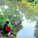 Analisis Umpan Dan Kebiasaan Ikan Mas Di Kolam Pemancingan