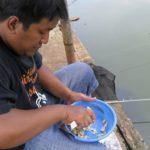 Buah Kesukaan Ikan Mas Terbukti Galak Untuk Campuran Umpan