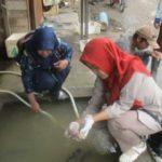 8 Penyebab Ikan Mas Mati Mendadak di Kolam Dan Cara Mengatasi