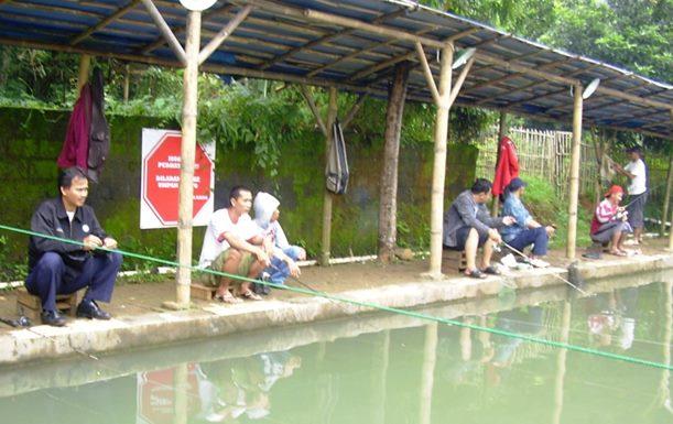 Aroma Pengumpul Ikan Mas Terbukti Manjur Pokoknya JOS