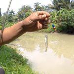 Rahasia Membuat Racikan Umpan Dengan Essen Jitu Ikan Wader