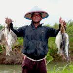 Rahasia 4 Jenis Umpan Ikan Putihan Di Sungai Terbukti Galak