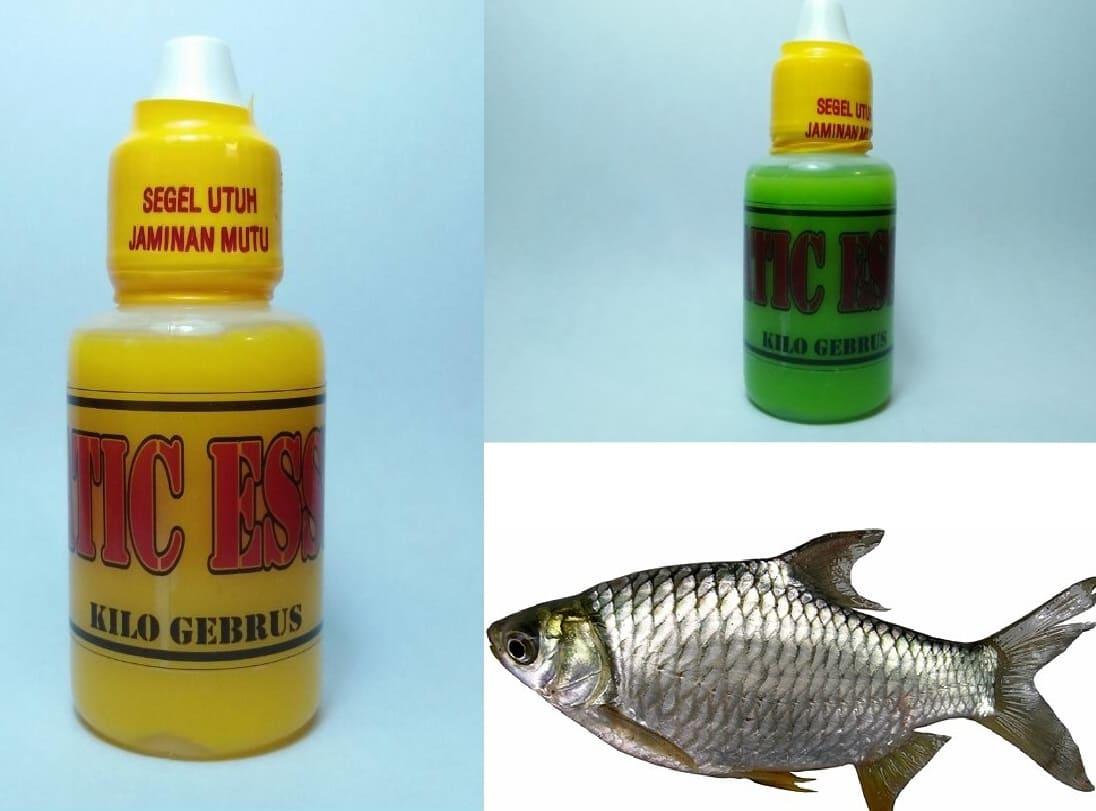 Cara Membuat Essen Khusus Ikan Tawes Paling Jitu