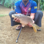 Umpan Ikan Mas Super Jitu Agar Hasil Pancingan Banyak