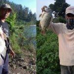 Campuran Umpan Lumut Mancing Nila Di Semua Tempat